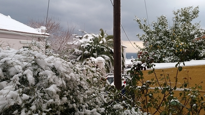 lesvos in white _snowing garden