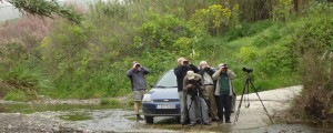 Birdwatchers-at-Tsiknias river-Skala kalloni-Lesvos